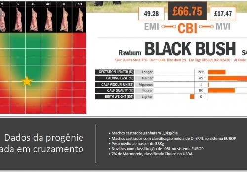Dados Abate portugues Blackbush.JPG