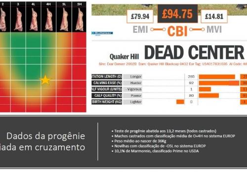 Dados Abate portugues.JPG