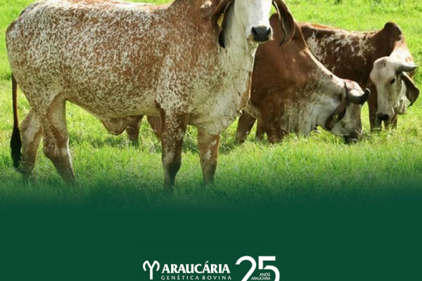 Melhoramento genético na pecuária leiteira