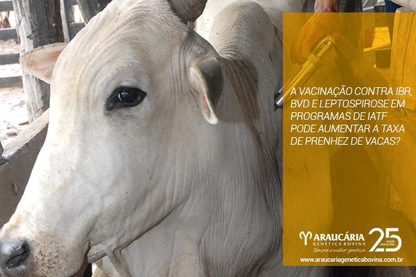 Dúvidas sobre vacinação do gado?