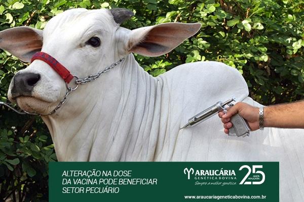 Aftosa: Alteração na dose da vacina pode beneficiar setor pecuário