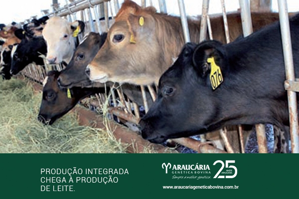Produção integrada chega à produção de leite