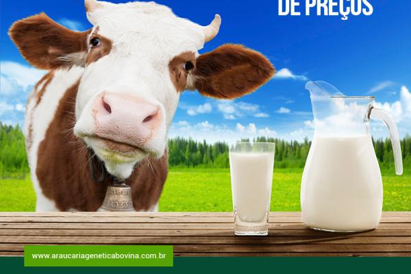 Alta nos valores do leite UHT sinaliza retomada de preços no campo