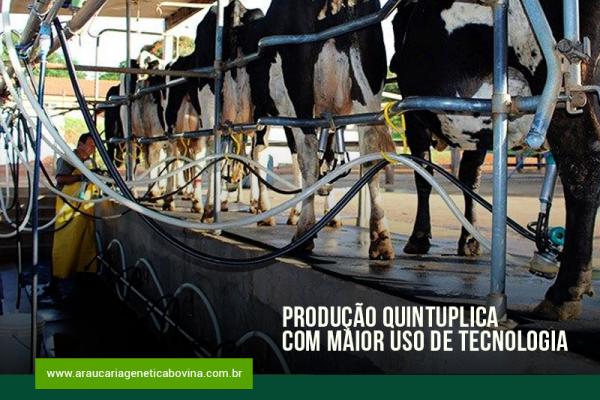 Leite: produção quintuplica com maior uso de tecnologia