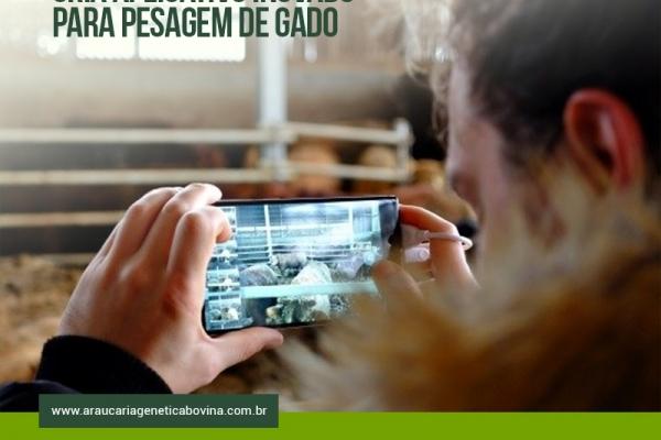 Start-up húngara cria aplicativo inovador para pesagem de gado