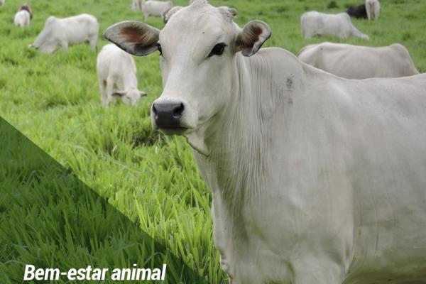 Bem-estar animal aumenta vendas de produtos no varejo