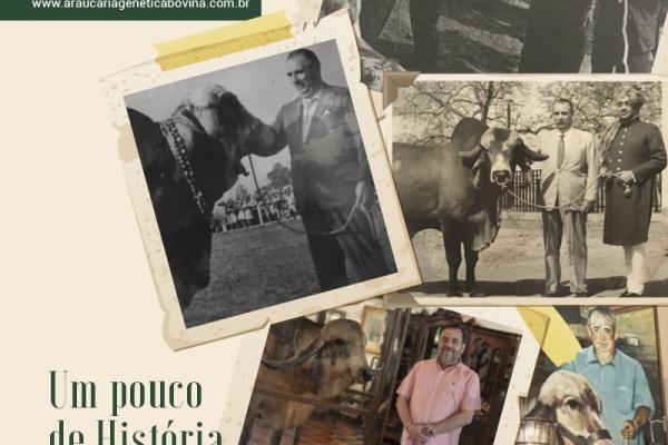 Como o Brasil transformou animal sagrado de marajá indiano em revolução genética e mercado bilionário