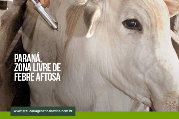 Paraná encaminha pedido ao Mapa para antecipar o fim da vacinação contra febre aftosa