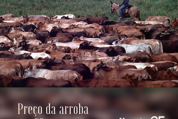 Arroba passa de R$ 150 em São Paulo