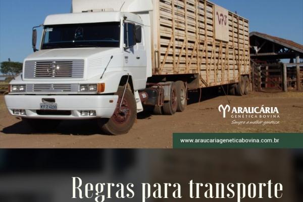Mapa quer unificar regras para transporte terrestre de animais