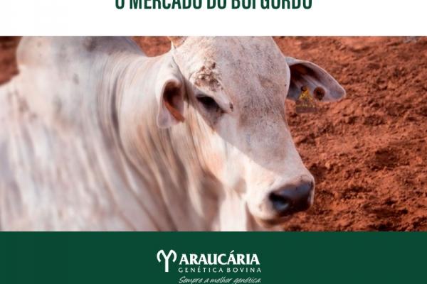 Cenário positivo para o mercado do boi gordo