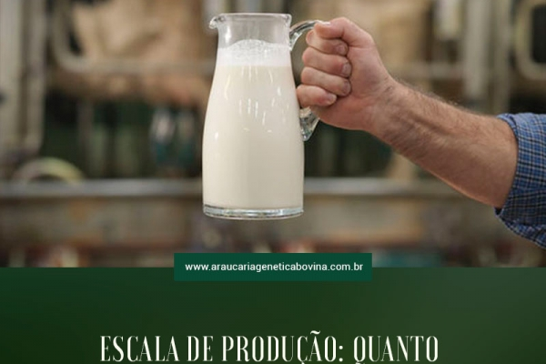 Escala de produção: quanto devo produzir de leite?