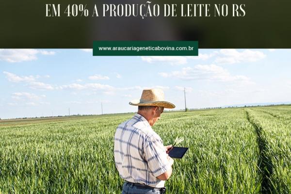 Planejamento forrageiro incrementa em 40% a produção de leite no RS