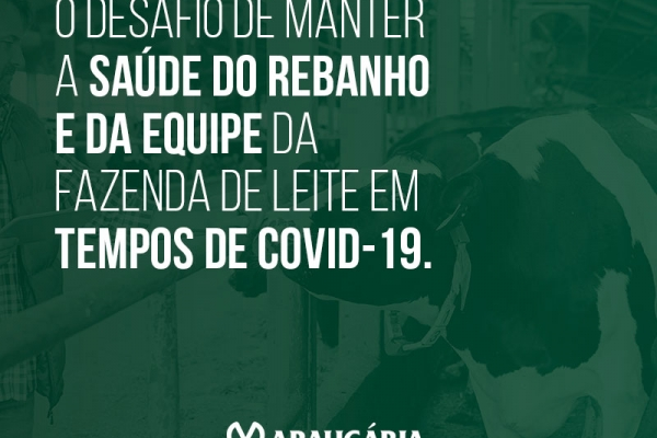 O desafio de manter a saúde do rebanho e da equipe da fazenda de leite em tempos de COVID-19.