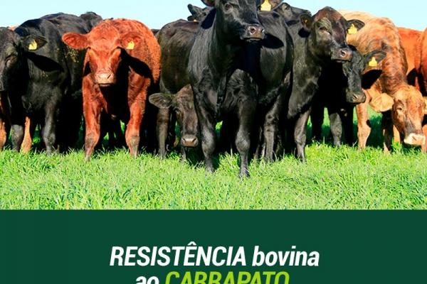 Brasil, Austrália e África do Sul unem dados genômicos sobre resistência bovina ao carrapato